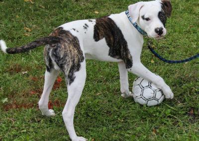 spot-dog-ball